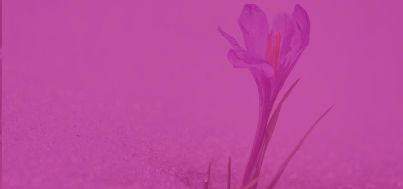 service-page-header-flower